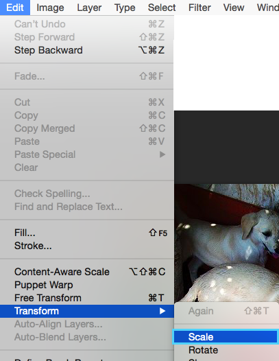 Cómo reducir el tamaño de un objeto dentro del lienzo en Photoshop: Edit > Transform > Scale