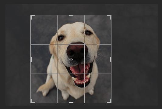 Mover las esquinas de recorte en Photoshop