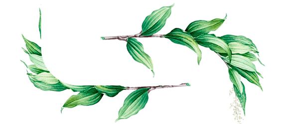 Descarga Vectores de Ramas de Plantas